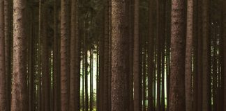 Forest Photo Elke Karin Lugert via Unsplash